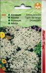 Alyssum | Albita