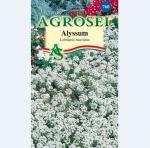 Alyssum alb | Lobularia maritima