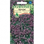 Alyssum violet | Lobularia maritima