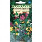 Flori amestec pentru jardiniere