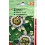 Passiflora | Floarea pasiunii